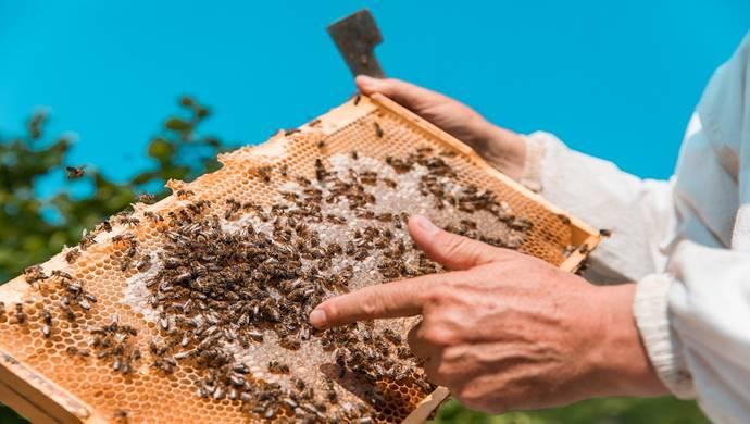 Bitkiler ve arılar yok oluyor kuraklık ise alarm vermeye başladı